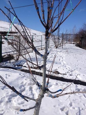Многосртовое дерево